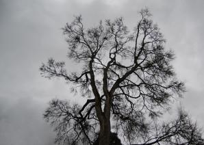 La majesté de l'arbre en contre plongée