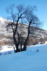 La force de l'arbre en contre jour dans un paysage de neige