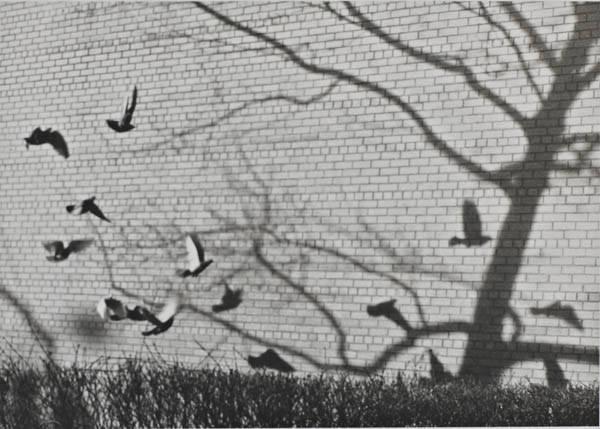 Andre Kertesz - Le vol des oiseaux